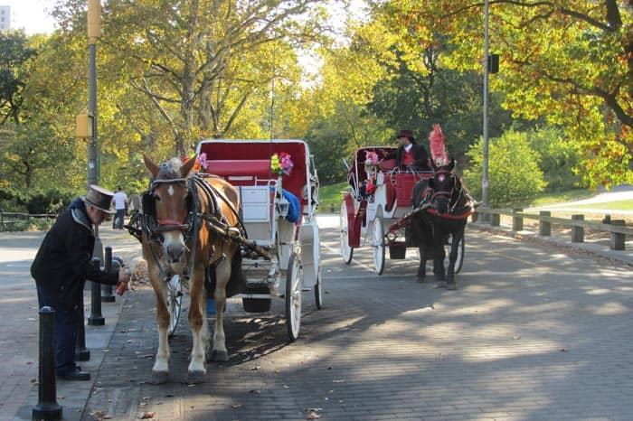 セントラルパークを馬車で周遊