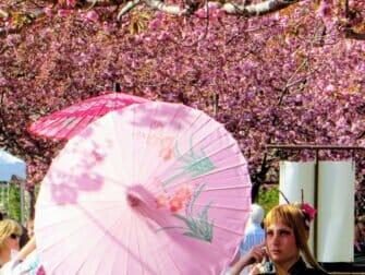 ニューヨークの桜 ブルックリン植物園での桜祭り