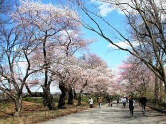 ニューヨークの桜 ユニオンスクエア