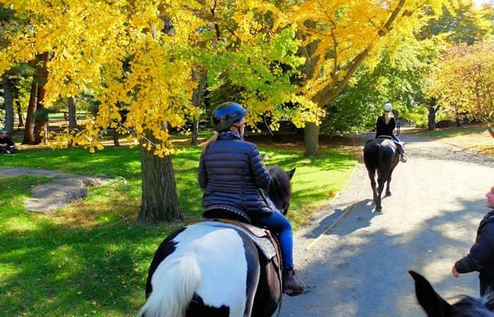 セントラルパーク 乗馬 - 散策中