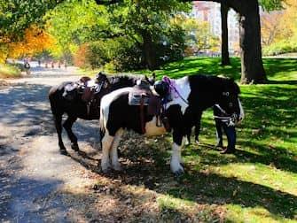 セントラルパーク 乗馬 - 馬たち